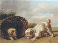 two basset griffon vendéens in an extensive landscape by henri baert