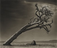 lion under leaning tree, masai mara by nick brandt