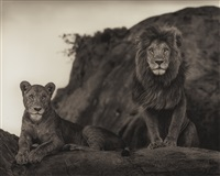 lion couple, serengeti by nick brandt