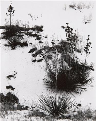 white sands new mexico by brett weston