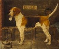 dublin hound by desmond snee