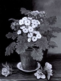 pot of primula by nellie s. haines