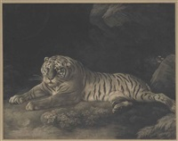 a tigress by george stubbs