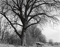 cottonwood, edge of development, longmont, colo. by robert adams