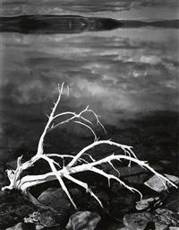 white branches, mono lake, california by ansel adams