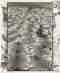 zebra carpet, lariak estate, laikysia, sept., for the end of the game ... last word from paradise by peter beard