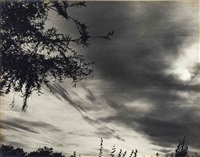 sun, clouds, branches, frankfurt by ilse bing