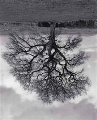 welsh oaks (no. 6) by rodney graham