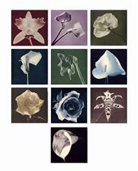 flowers by robert mapplethorpe