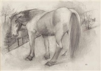 pferd by robert angerhofer