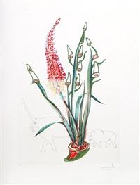 florals: stock rhinos by salvador dalí