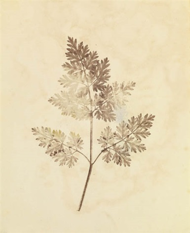 the seminal pencil of nature 13 works by william henry fox talbot