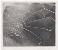 spiderweb by vija celmins