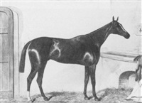 the bay racehorse