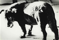 misama (stray dog) by daido moriyama