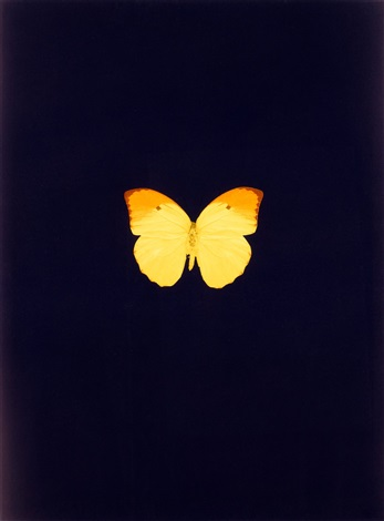 untitled 04 new beginnings by damien hirst
