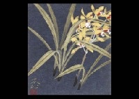 orchid by fuku akino