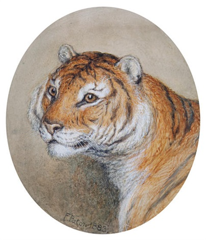 head of a tiger (study) by frank paton
