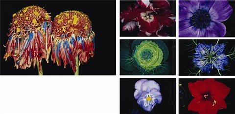 untitled flower6 works untitled painting flowers 7 works by nobuyoshi araki