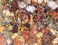 fleurs by rady rautovich yakubov