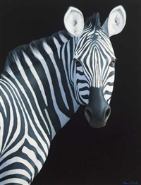 zebra by brian mccarthy