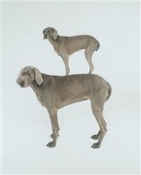 dog and pony by william wegman