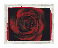study of rose by robert longo