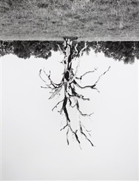 oak trees, red bluff (6) by rodney graham