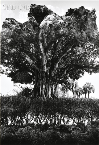 rock tree by jerry uelsmann