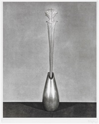 flower 9 by robert mapplethorpe