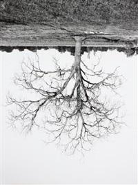 oak trees, red bluff (7) by rodney graham