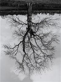 welsh oak #4 by rodney graham