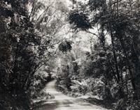 paradise 8 (blumfield track), daintree, australia by thomas struth