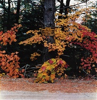 rangeley, maine, october by william wegman