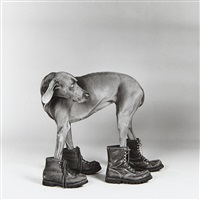 fay ray by william wegman