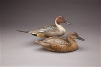 pintail (pair) by robert bates