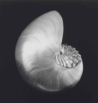 shell + cristal by robert mapplethorpe