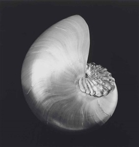 artwork by robert mapplethorpe