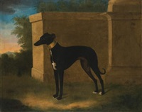 portrait of a greyhound, called pompon by john wootton