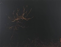 untitled (forest, night) by paul seawright