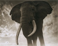 elephant against sky, amboseli by nick brandt