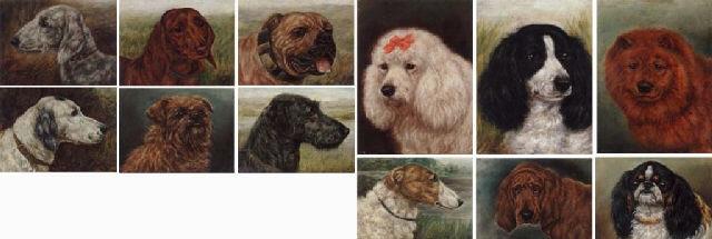 head study of prize winning dog by edward aistrop