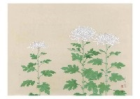 chrysanthemum by zenjiro uda