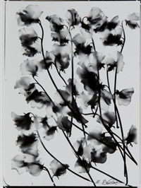 fleurs by edouard boubat