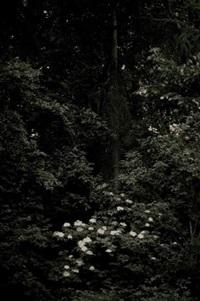 les merveilles du bois by gilles voisin