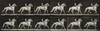 man riding a horse, plate 590 from animal locomotion by eadweard muybridge