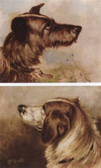 the head of a terrier by william ansdell