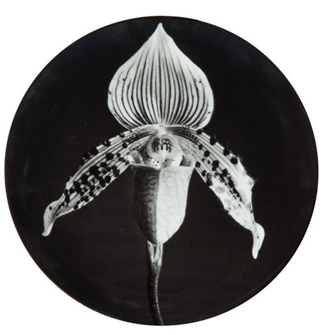 orchid and calla lily plates set of 2 by robert mapplethorpe