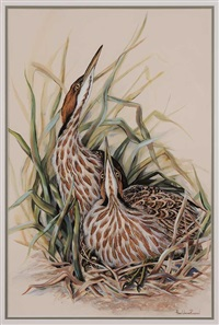 nesting bitterns by anne worsham richardson