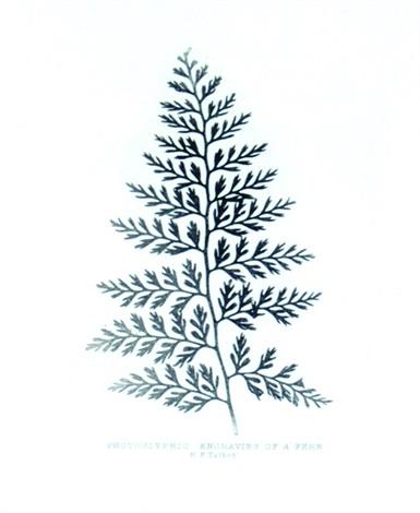 fern by william henry fox talbot
